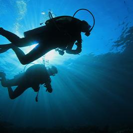scuba diver investigating coral