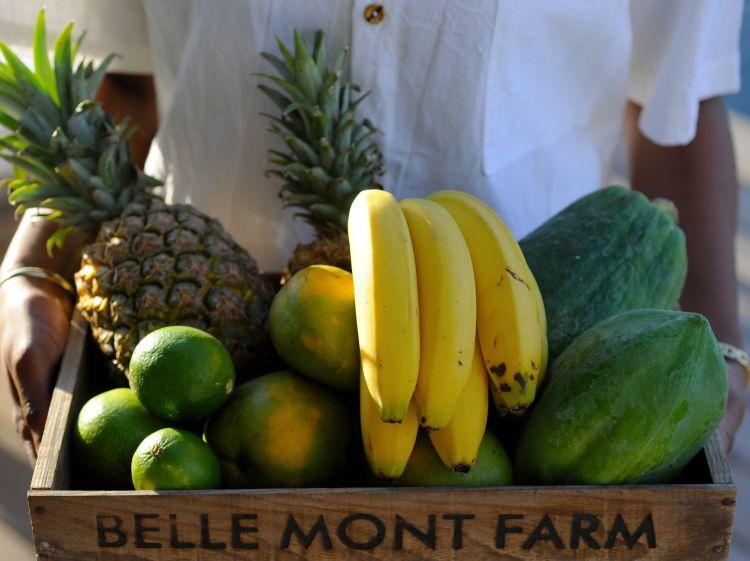 Belle Mont Farm | StKittsTourism.kn