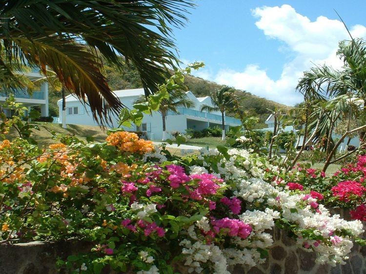 Timothy Beach Resort | StKittsTourism.kn